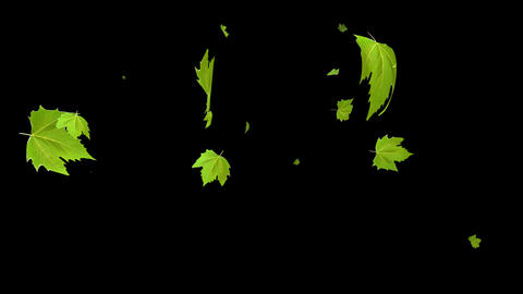 Green maple leaves falling Animation