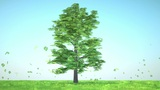 Luck: Abstract clover tree sticks into green glade with flowers Animation