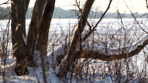 Snowy Trees stock footage