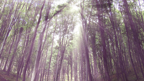 4 K Sun Shines Through Leaves In Mysterious Deep Forest 1 stock footage