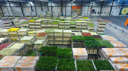 Time Lapse Auction Floor At Aalsmeer Floraholland Largest Flower Auction The The stock footage