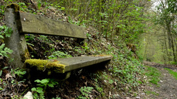 Bench Overgrown With Grass In The Forest And Path In The Background stock footage