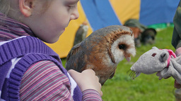 Girl Is Holding An Owl. Barn Owl. Slow Motion stock footage