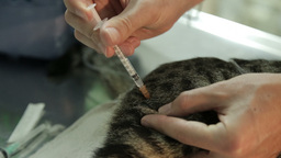 MVI 0726 Giving a cat an injuction during treatment Footage