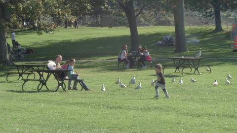 Family And Friends Picnic In The Park Feeding Birds stock footage