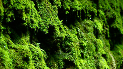 Dripping Moss Shades State Park Indiana Footage