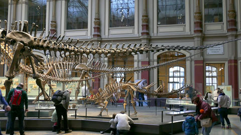 8 Berlin City Germany Europe Natural History Museum People Dinosaurs stock footage