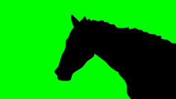 SHADE OF RUNNING HORSE stock footage