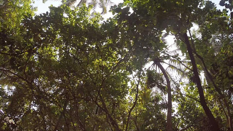Maldive Bycicle - Bike POV Ride Palm Trees stock footage