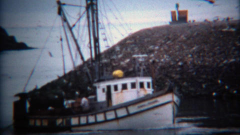 1971: Fishing boat with bird flock circling coming into harbor port Footage