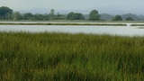 Long Grass And Water stock footage