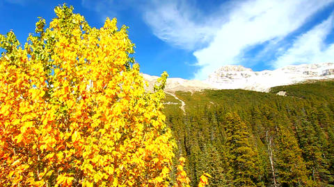 Banff National Park Fall Colors stock footage