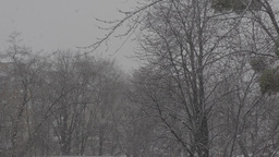 Big snowfall. The snowflakes are flying down. 3840-2160. UHD Footage