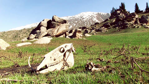 Cattle Skull In Mountain Valley Footage