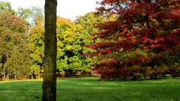 Autumn Park (forest - Trees) - Colored Trees - Grass stock footage