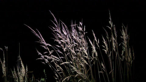 Yellow dry grasses waving in the wind evening under the light of a reflector 62 Footage