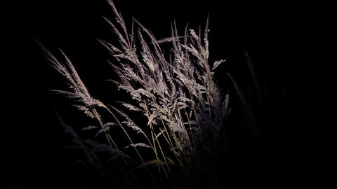 Yellow dry grasses waving in the wind evening under the light of a reflector 63 Footage