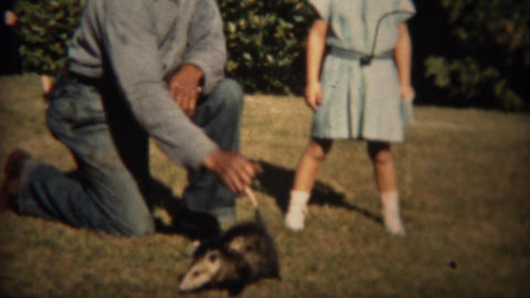 1937: Man Carries Wild Opossum Animal By Tail With Girl Watching stock footage