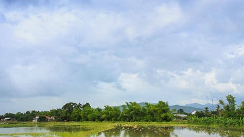 Panorama of Cloudy Sky over Rice Field in Water Forest Village Footage
