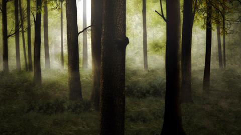 Misty forest in the morning Animation