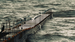 Seagulls Sitting In A Row On The Handrail Of The Breakwater And Hunt Down The Fi stock footage