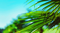 Palm Leaf Sways In The Wind On A Bright Sunny Summer Day stock footage