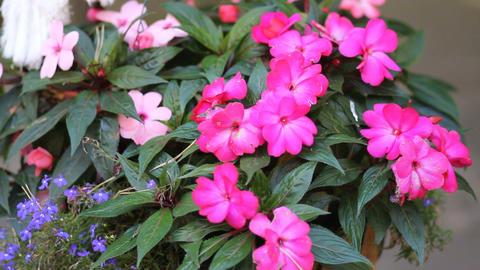 Pink Flowers In The Forest stock footage
