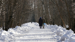 Happy Couple Walking In The Winter Forest stock footage