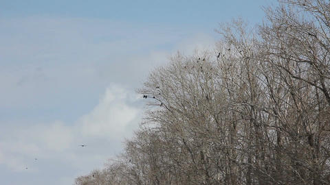 A flock of birds in the trees Footage