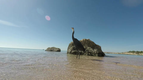 The bird on the shore of a tropical sea Footage