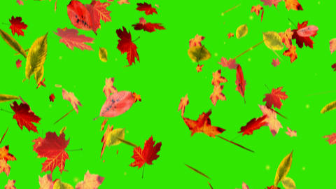 Falling Leaves On Green Screen stock footage