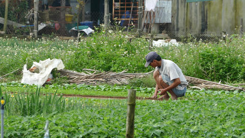 Farmer working and smoking a sigaret at the countryside Footage