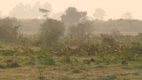 Birds At Misty Morning At The Countryside Of Cambodia stock footage