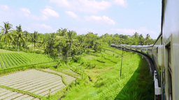 Passenger train is riding past the rice fields of Java Footage