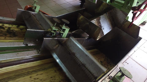 Tea Raw Moving On Machine Conveyor At Factory stock footage