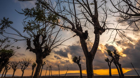 Scary Trees Sunrise Timelapse at a beach in Bali, Indonesia Footage