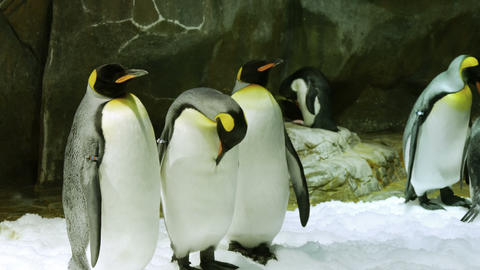 Penguins Standing Next To The Rocks stock footage