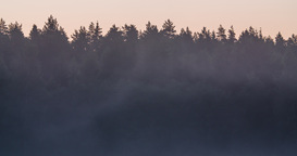 Time Lapse Of Mist Rising In Front Of A Forest Silhouette Before Sunrise stock footage