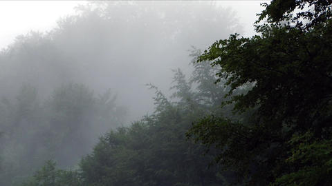 Mists That Rise From The Early Hours Of The Forest That Is Still Asleep 1 stock footage