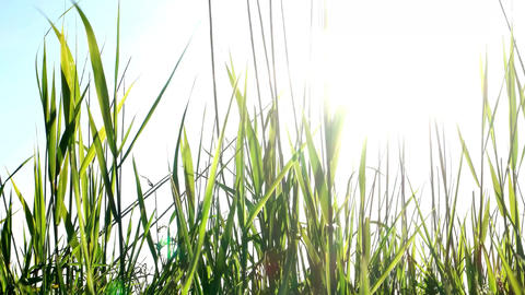 Moving Blades Of Grass Stock Video stock footage