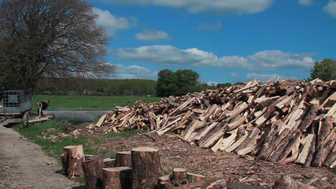 Tree And Cut Wood stock footage