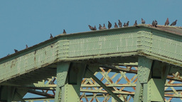 Birds Land And Sit Atop Bridge stock footage