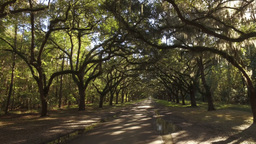 Tracking Shot Of Mossy Trees At Wormsloe Plantation stock footage