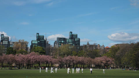 Time Lapse Of A Cricket Match In A Park stock footage