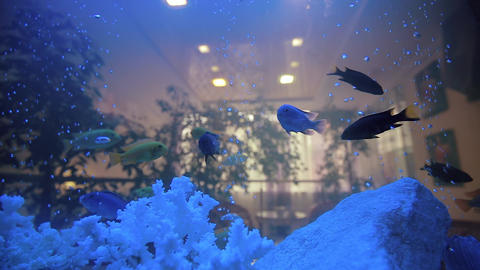 Aquarium Fish Tank Cora In Home stock footage