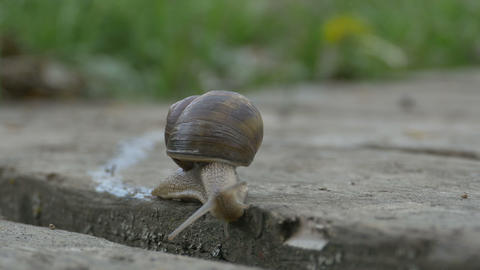 Snail Crawling On Plank stock footage