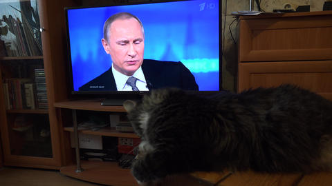 The Cat Looks At The Russian President Vladimir Putin On TV. 4K stock footage