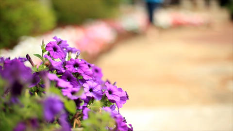 People Walking Past Flowers stock footage