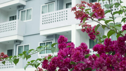 blossoming tree on a background of a modern building Footage