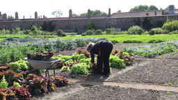 The Kitchen Garden Hampton Court Palace UK stock footage